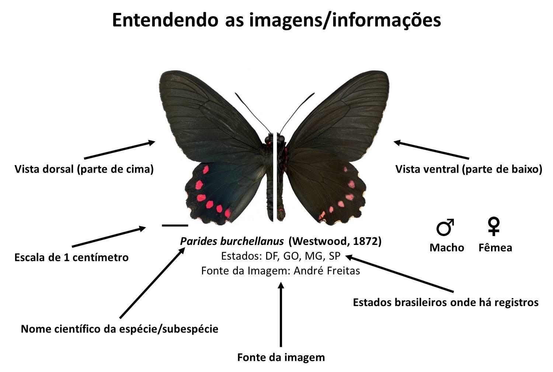 Modelo imagem